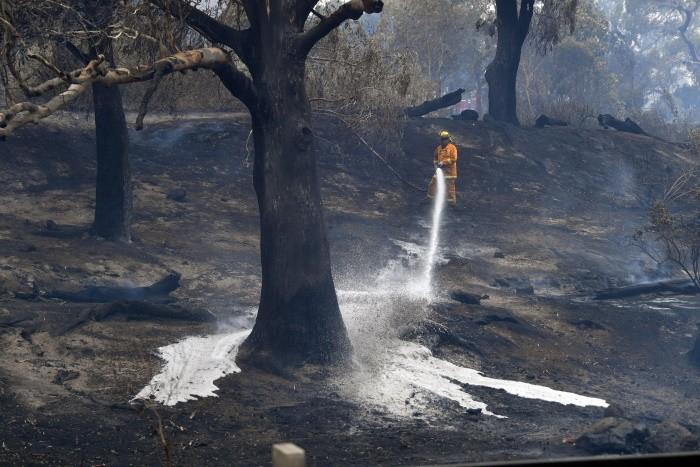 Число погибших на пожарах в Австралии достигло 17