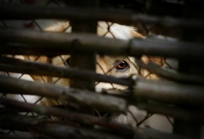 В Якутии на 50-градусном морозе начали массово умирать собаки в холодных вольерах