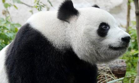 Как покормить животных в Московском зоопарке не выходя из дома