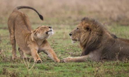 У самок млекопитающих не нашли склонности стареть медленнее самцов