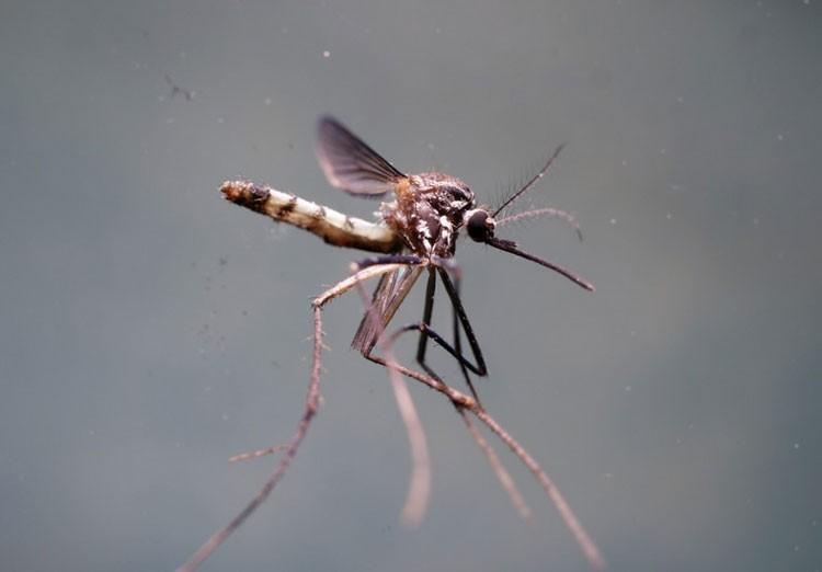 Комары научат квадрокоптеры летать в кромешной тьме