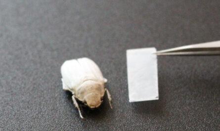 Хитиновые чешуйки жука подсказали, как получить яркий белый цвет без пигментов