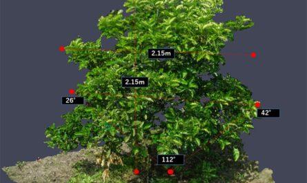 NEC с помощью агрономии, дронов и облачных услуг поможет улучшить фруктовые сады