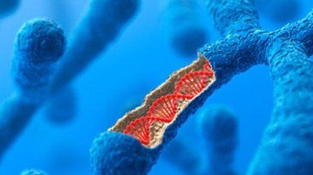 Новый проект приблизит коммерческую запись данных на основе ДНК