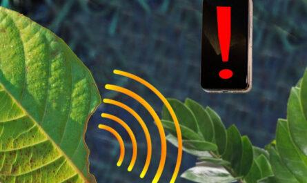 Со смартфоном на грядке: наносенсоры в листьях предупредят о стрессе растений