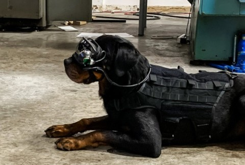 Собак в армии США снабдили очками дополненной реальности