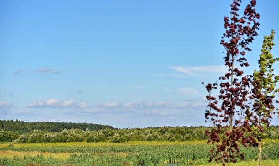 Четыре земельных участка в ЗАО и ТАО планируется выставить на торги