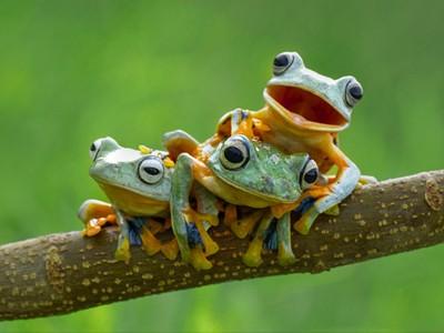 Биороботы из лягушек совершат революцию в медицине [ВИДЕО]