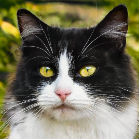Нейросеть генерирует снимки котов, неотличимых от настоящих