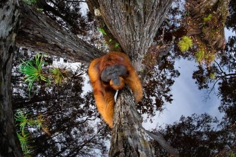 Лучшие фото дикой природы по версии журнала Nature TTL