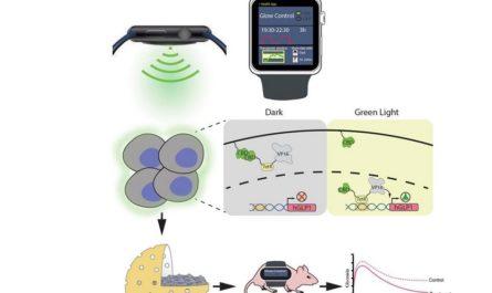 Умные часы способны управлять поведением клеток и выработкой генов