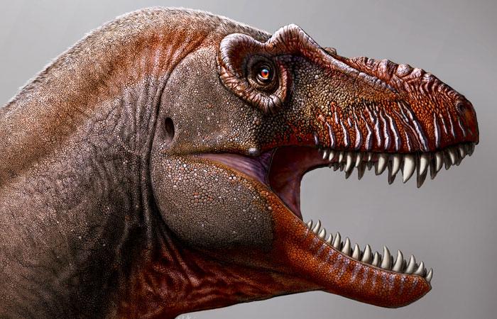"""Новый вид тираннозавра, открытый в Канаде, назвали """"Жнецом смерти"""""""