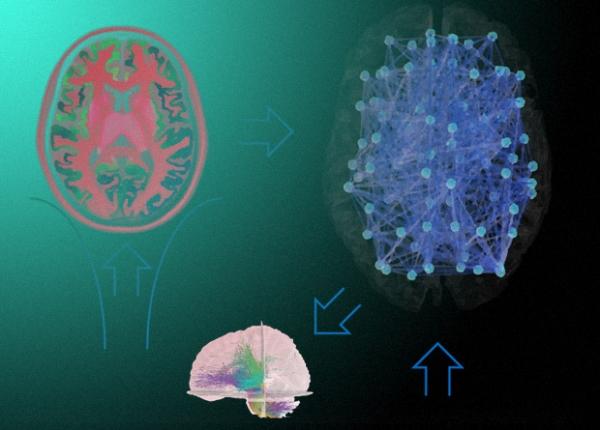 Совмещение активности нейронов и нейромедиаторов помогло уточнить эффект псилоцибина